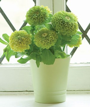 'Green Envy' Zinnia; credit: Burpee